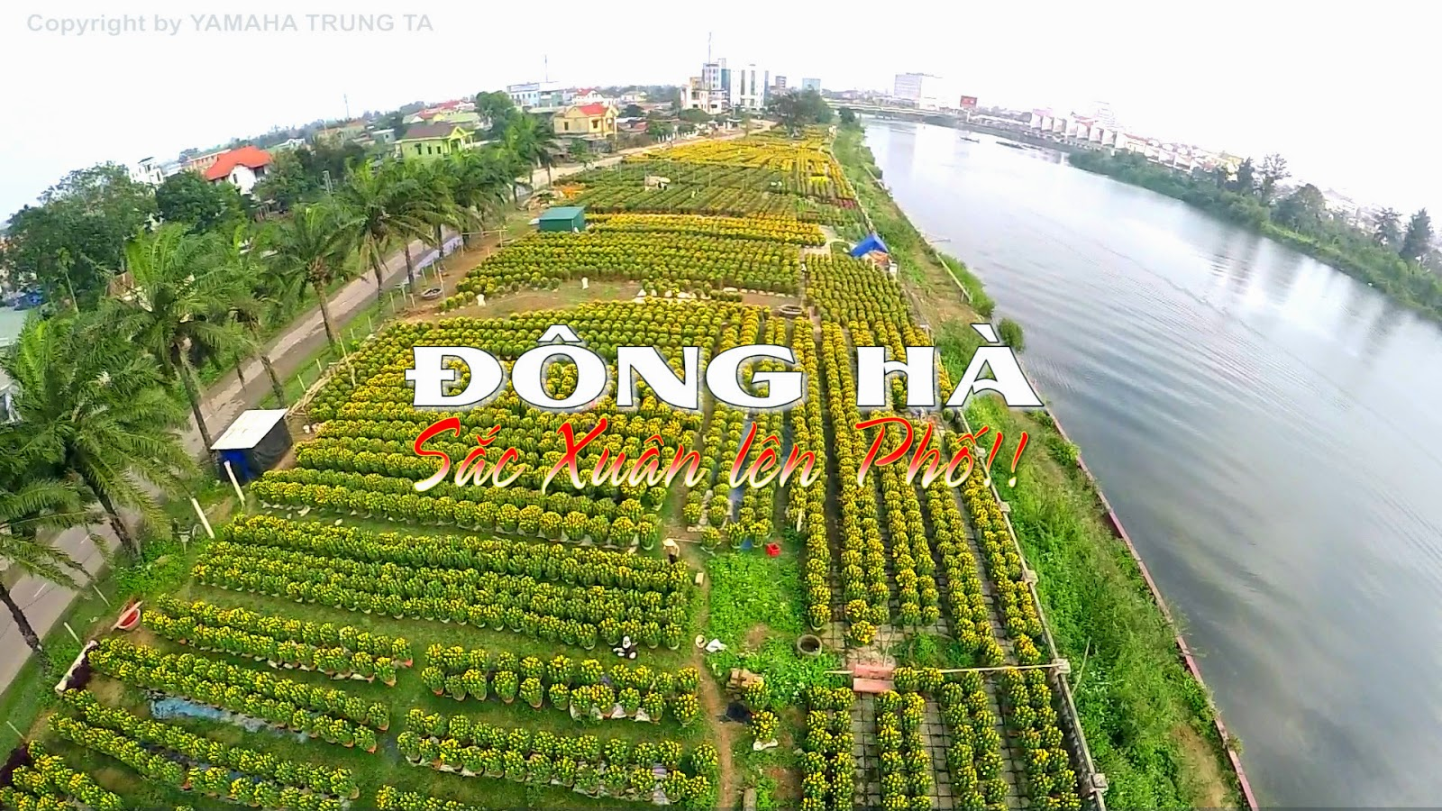 video-dong-ha-sac-xuan-len-pho