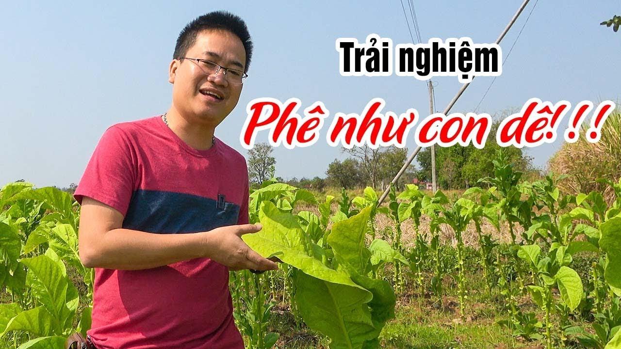 Trải nghiệm cánh đồng Thuốc Lào ▶ Sự tích Phê như con Dê là có thật!