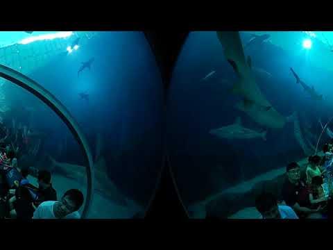 Ngắm cá mập dưới đại dương qua góc nhìn 360 độ 😂